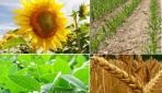 Informe mensual del USDA – Estimaciones en EE.UU.