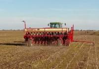 La falta de lluvias golpea a la siembra de trigo, pero se alcanzarían las 7 millones de hectáreas