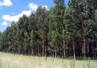 Córdoba: Está disponible online el manual para iniciar el proceso obligatorio de forestación de campos