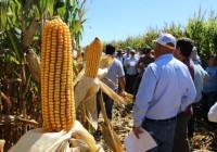INTA Marcos Juárez – Jornada de actualización en maíz – Módulos 1 y 2