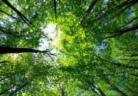 II Jornada de forestación del sur de Córdoba