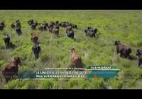 La ganadería sustentable es negocio