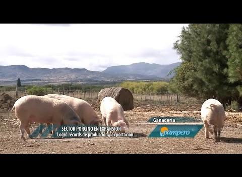 Sector porcino en expasión