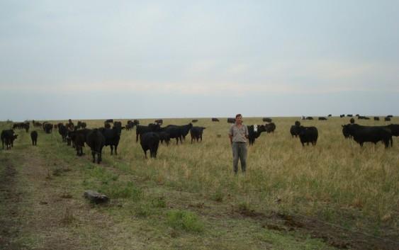 Bases para mejorar la rentabilidad de la ganadería de carne