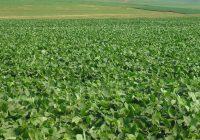 Alan Severini – CRONOSOJA: El Software que ayuda a planificar la siembra de soja