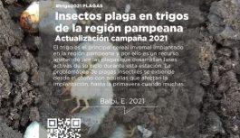 Insectos plaga en trigos de la región pampeana