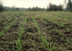 Entradas y salidas en el manejo de plagas: ¿qué está pasando en lotes de trigo?
