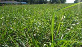 JORNADA A CAMPO: Cultivos de servicios – Salud del suelo