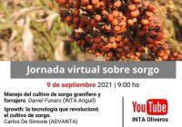 Jornada virtual. Sorgo: un cultivo sustentable